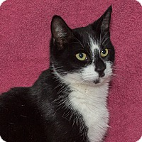 Adopt A Pet :: Emily - Elmwood Park, NJ
