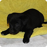 Adopt A Pet :: Sadie - Fort Atkinson, WI