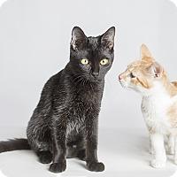 Adopt A Pet :: Sweet Pea - El Dorado Hills, CA