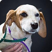 Adopt A Pet :: Molly - Waterbury, CT