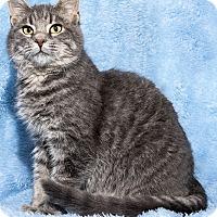 Adopt A Pet :: Rylee - Mt. Prospect, IL