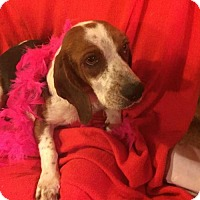 Adopt A Pet :: Zoey - Foristell, MO