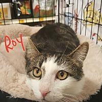 Adopt A Pet :: ROY - Gainesville, VA