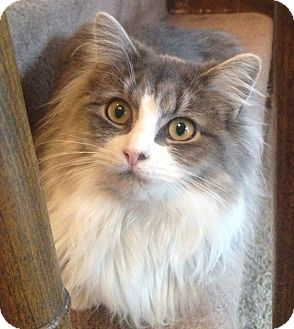Cats For Adoption In Salem Nh