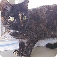 Adopt A Pet :: Cori - Fremont, OH
