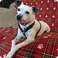 Adopt A Pet :: Annie - Schenectady, NY