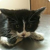Adopt A Pet :: Ruthie - Warren, MI