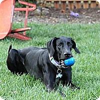 Adopt A Pet :: Betsy - Virginia Beach, VA