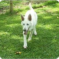 Adopt A Pet :: Hanz - Chandler, IN