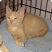 Adopt A Pet :: Soldier - Colmar, PA