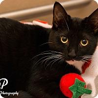 Adopt A Pet :: Sweet Pea - Fountain Hills, AZ
