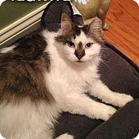 Adopt A Pet :: Adalind - River Edge, NJ
