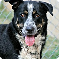 Adopt A Pet :: Bear - Lufkin, TX