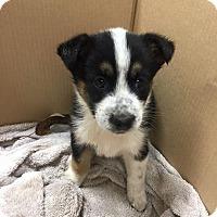 Adopt A Pet :: Itsa - West Warwick, RI