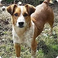 Adopt A Pet :: Reno - Avon, NY