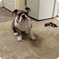 Adopt A Pet :: Tyson - Columbus, OH