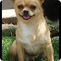 Adopt A Pet :: Paco - Columbia, SC