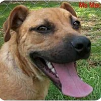 Adopt A Pet :: Ms Mac - Ozark, AL