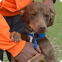 Adopt A Pet :: Julie - 30 lbs - Warwick, NY