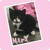 Adopt A Pet :: Maira (Hera's baby) - Mount Laurel, NJ