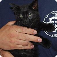 Adopt A Pet :: Liam - Brooklyn, NY