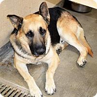 Adopt A Pet :: German Shep male - San Jacinto, CA