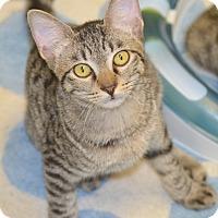 Adopt A Pet :: Neville - San Leon, TX