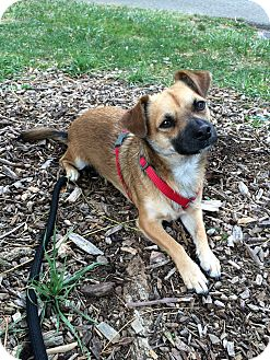 Terrier (Unknown Type, Small) Mix Dog for adoption in Woodland, California - Roger