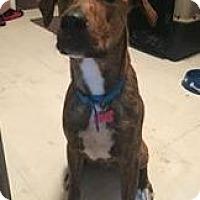 Adopt A Pet :: Loki - Elyria, OH