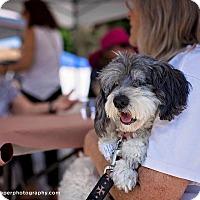 Adopt A Pet :: Doggonit dorris - Vista, CA