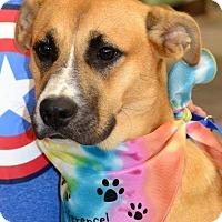Adopt A Pet :: Layla - Albemarle, NC