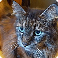 Adopt A Pet :: Jasmine - Salisbury, MA