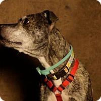 Adopt A Pet :: Faith - Bloomfield, NJ