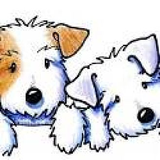 Terrier (Unknown Type, Small) Mix Dog for adoption in San Bernardino, California - URGENT on 12/3 SAN BERNARDINO
