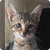 Adopt A Pet :: PIPPA - West Palm Beach, FL