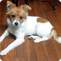 Adopt A Pet :: Stormy * ADOPTED * - Trenton, NJ