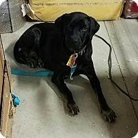 Adopt A Pet :: Mollie - Laingsburg, MI