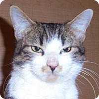 Adopt A Pet :: C29 Litter-Danny-ADOPTED - Livonia, MI