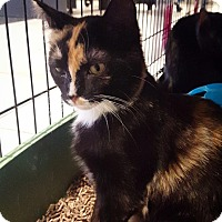 Adopt A Pet :: Paisley - Lafayette, NJ