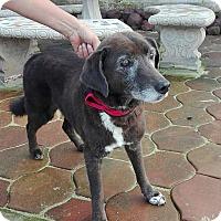 Adopt A Pet :: Abuelo - San Ysidro, CA