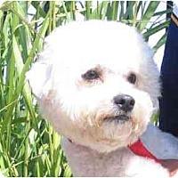 Adopt A Pet :: Marco - La Costa, CA