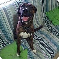 Adopt A Pet :: Bradford - Hamilton, ON