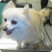 Adopt A Pet :: Mama - Long Beach, CA