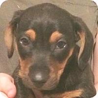 Adopt A Pet :: Pleasant Lake#2M - Orlando, FL