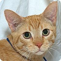 Adopt A Pet :: Turner D. - Sacramento, CA