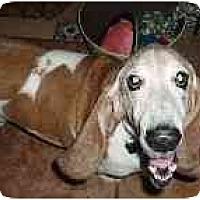 Adopt A Pet :: Vladimir - Phoenix, AZ