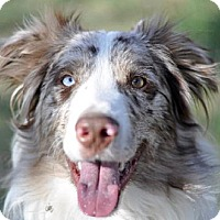 Adopt A Pet :: Jai - Dodson, MT
