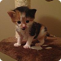 Adopt A Pet :: Sabrina - Edmonton, AB