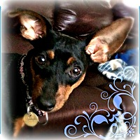 Adopt A Pet :: Tilly - Sacramento, CA