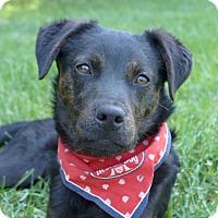 Adopt A Pet :: Lincoln - Mocksville, NC